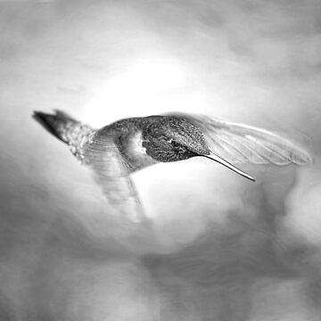 In Flight by ivoire