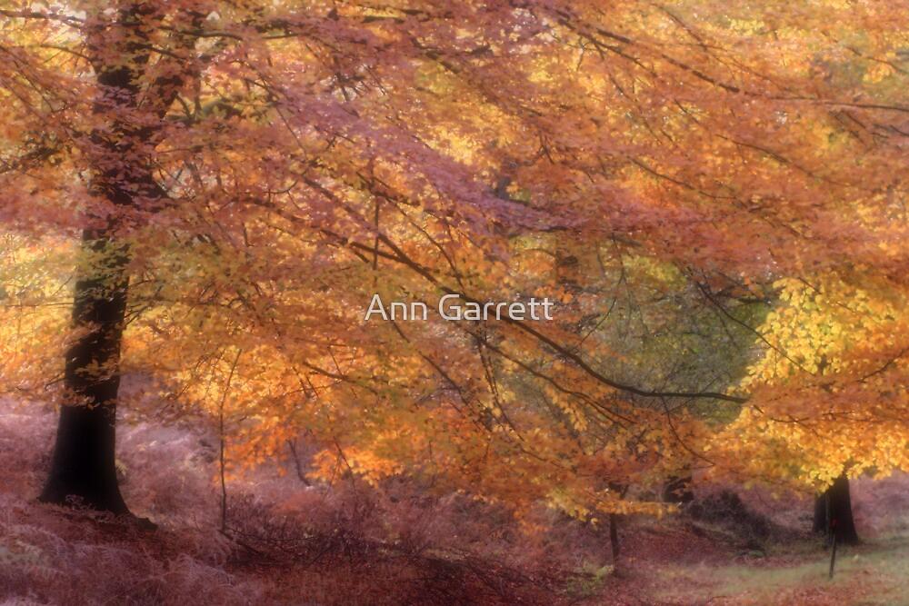 Fall Colours by Ann Garrett