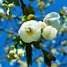 Bloom by MariaVikerkaar