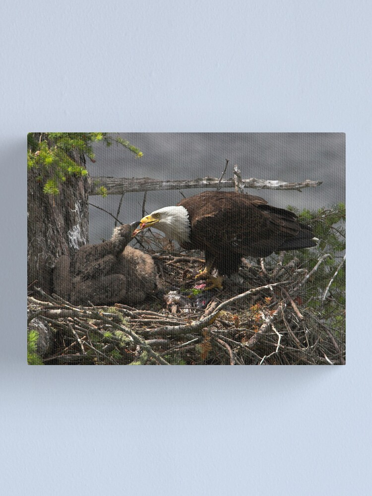 Alternate view of A Tasty Morsel Canvas Print