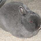 Resting Rabbit by Michael John