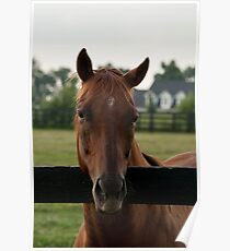 Commentator - Old Friend's Equine Poster