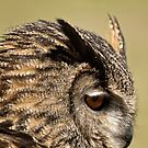 Eurasion Eage Owl by Tracey  Dryka