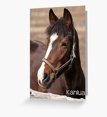 Kahlua - NEP Ottawa, ON Greeting Card