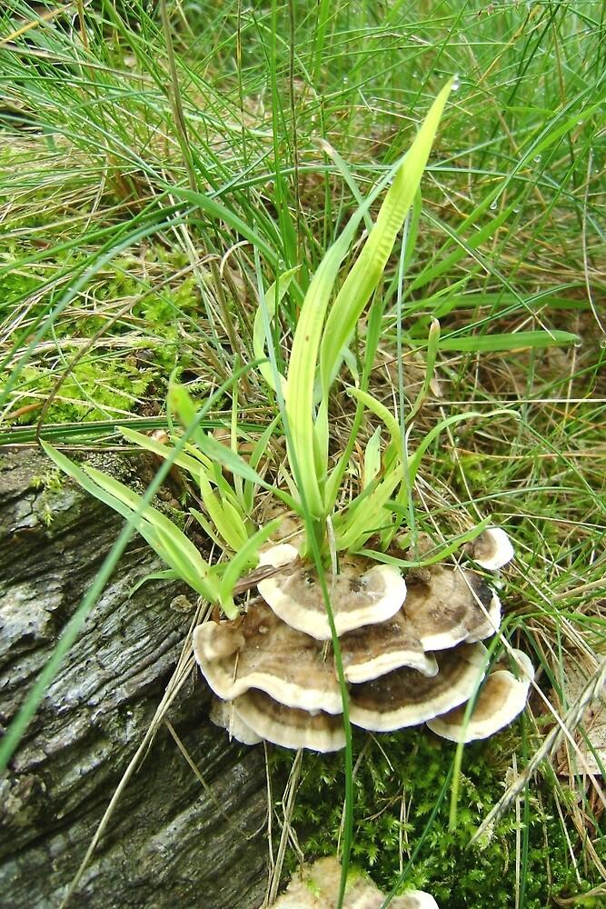 Fungus foliage flame by armadillozenith
