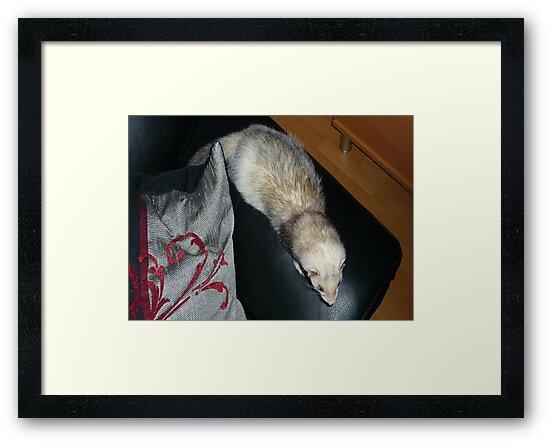 Ferret with winter coat by MordaxFurritus