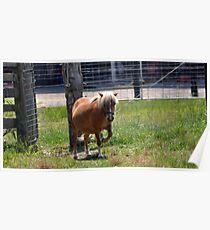 Prancing Pony Poster