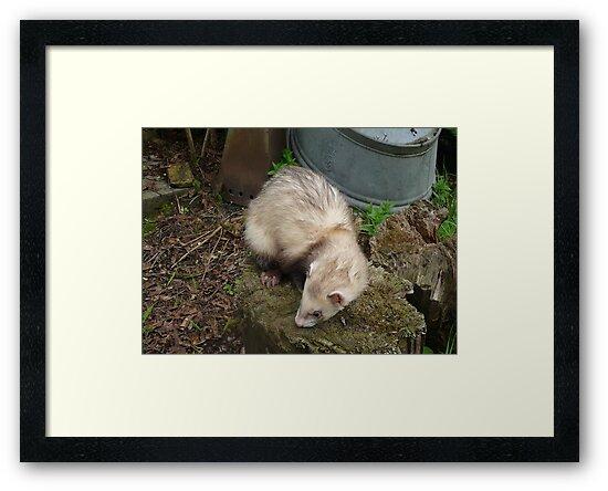 Ferret in spring by MordaxFurritus