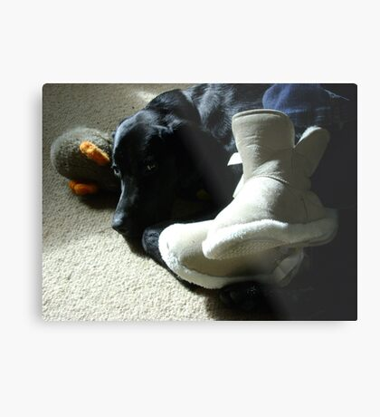 Domestic Bliss (dog at mistress' feet with toy)  Metal Print