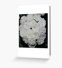 White blossoms Greeting Card