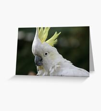 Captain the cocky Cockatoo Greeting Card