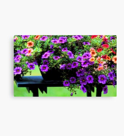 Potted Calibrachoa Canvas Print