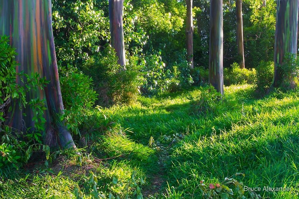 Rainbow Eucalyptus Grove on Road to Hana, Maui by Bruce Alexander