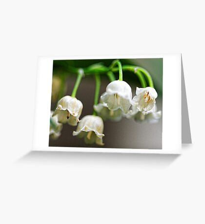 Lily-of-The-Valley - Bridgton,  Maine Greeting Card