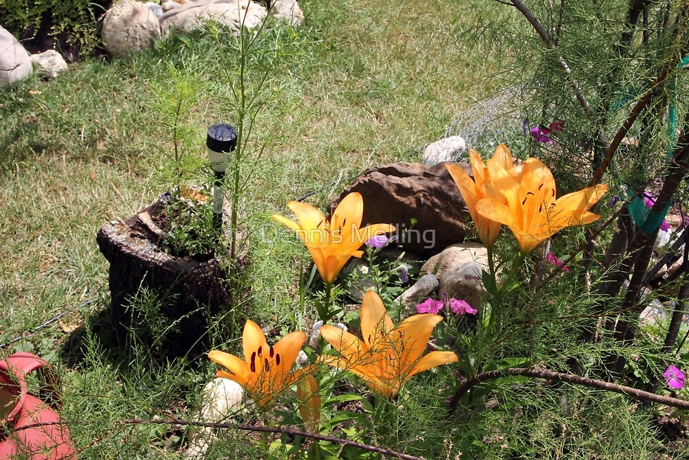 More Golden Lilies in Our Garden by Dennis Melling