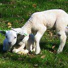 Two little Lamb by ienemien