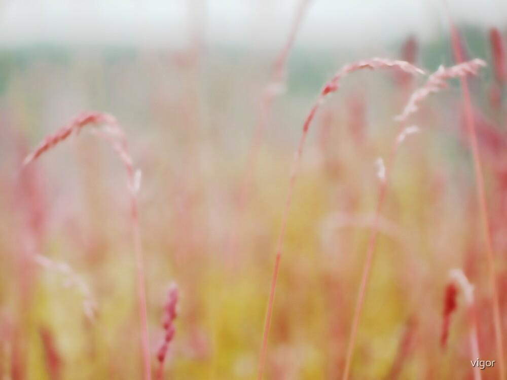 summer grass 15 by vigor