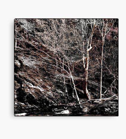 Nature's Other Mood Canvas Print