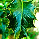 I am the Holly... Without Ivy by Lyndy