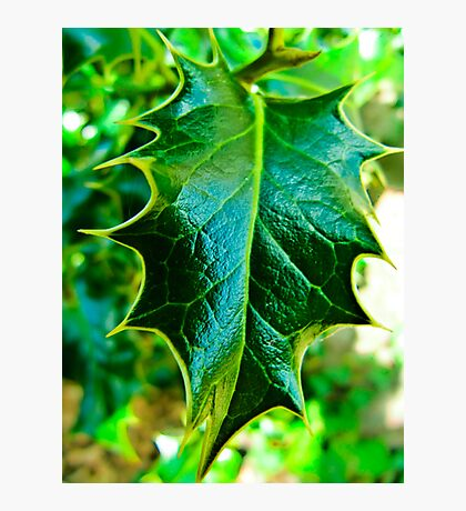 I am the Holly... Without Ivy Photographic Print