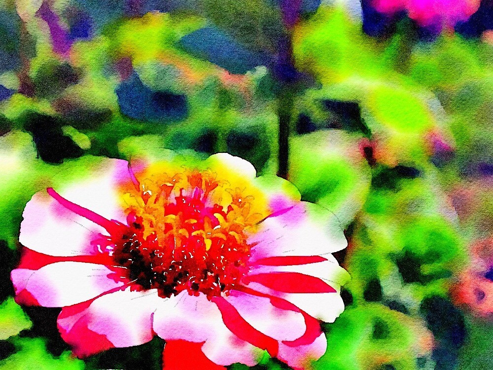 Zinnia Watercolor Cards and Stickers by Douglas E.  Welch