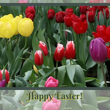 Happy Easter Cards with Colorful Spring Tulip Flowers by LazyL