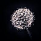 Dandelion Dream by ParkDG