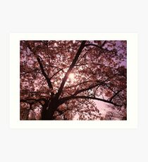 From Under the Blossom Tree, Chelmsford, Hylands Park Art Print