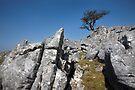 The Skirethornes Sentinel by SteveMG