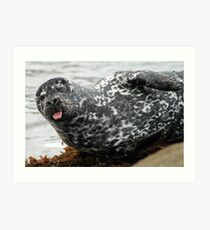 Cambria Seal Art Print