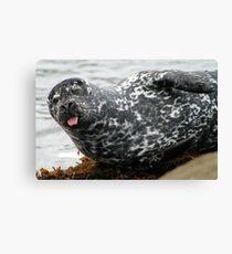 Cambria Seal Canvas Print