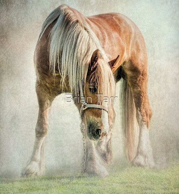 Gypsy in the morning mist by Brian Tarr
