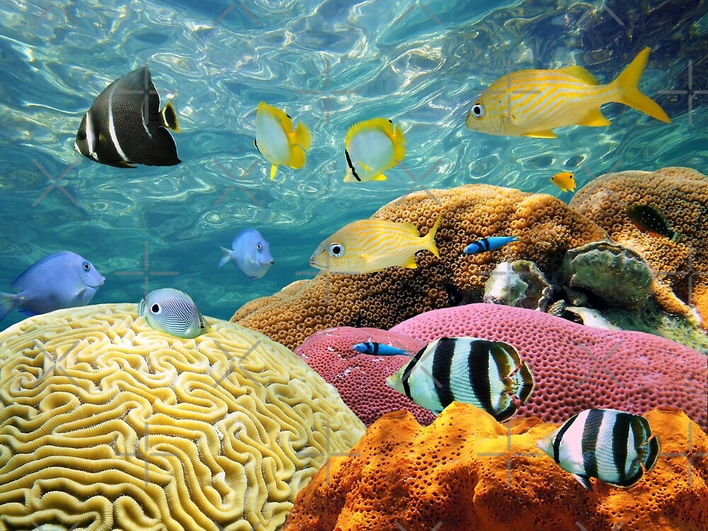 Colorful corals and tropical fish underwater by Dam - www.seaphotoart.com