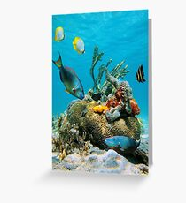 Colorful tropical marine life underwater sea Greeting Card