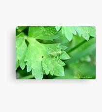 Grasshopper green on green leaf Canvas Print