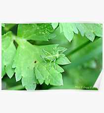 Grasshopper green on green leaf Poster
