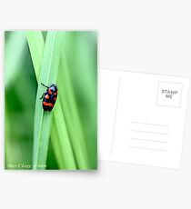 Red-and-black froghopper, Cercopis vulnerata  Postcards