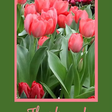 Beautiful Tulip Spring Flowers Thank You  by LazyL