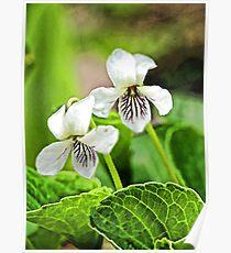 Two Wildflowers - Bridgton,  Maine Poster