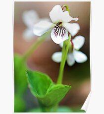 Spring Wildflowers - - Bridgton,  Maine Poster