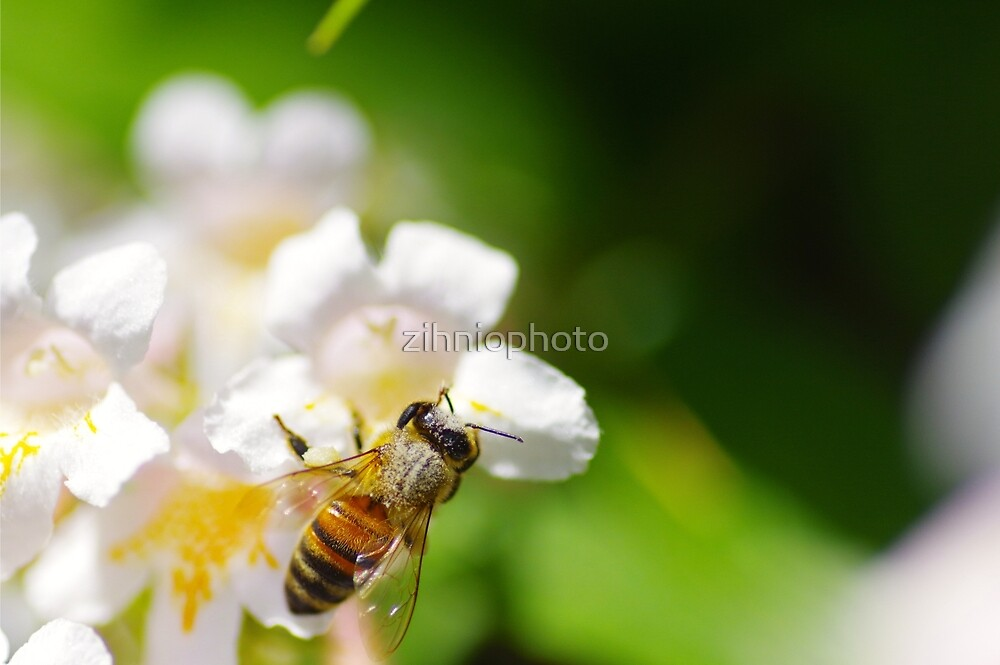 Buzzing bee by zihniophoto