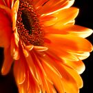 Orange Explosion by Melonie Wallace