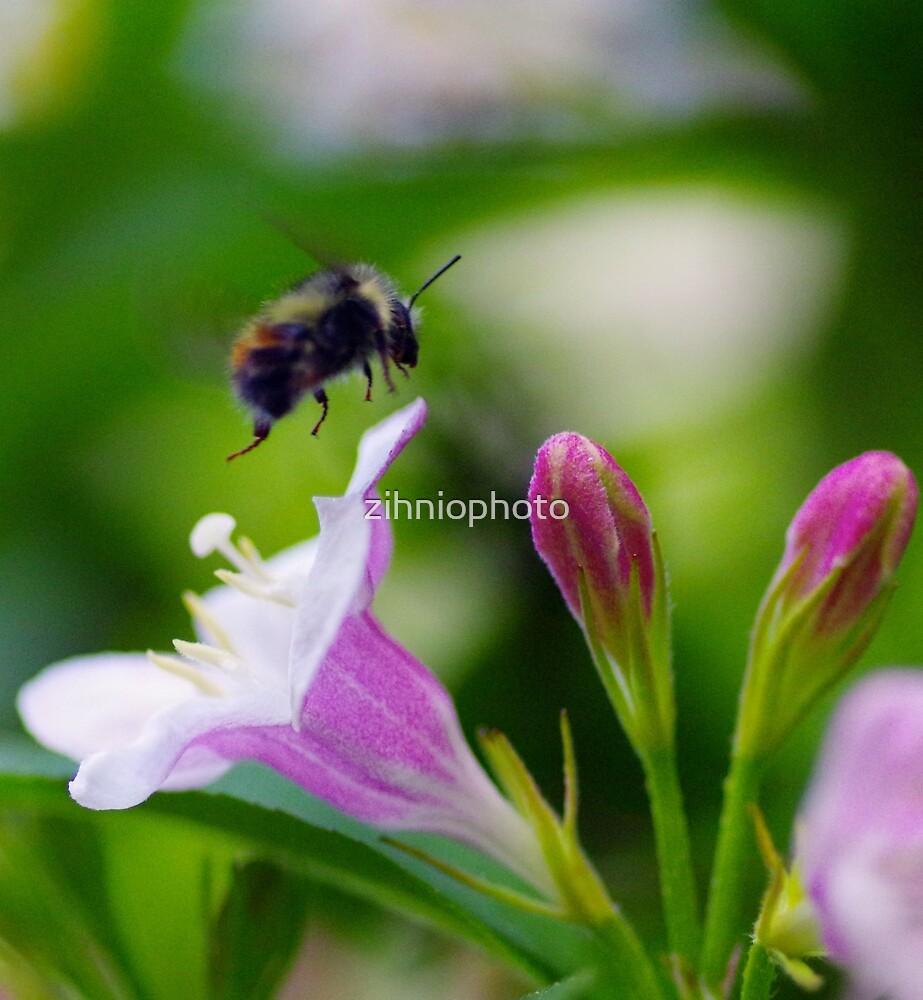 Bee by zihniophoto