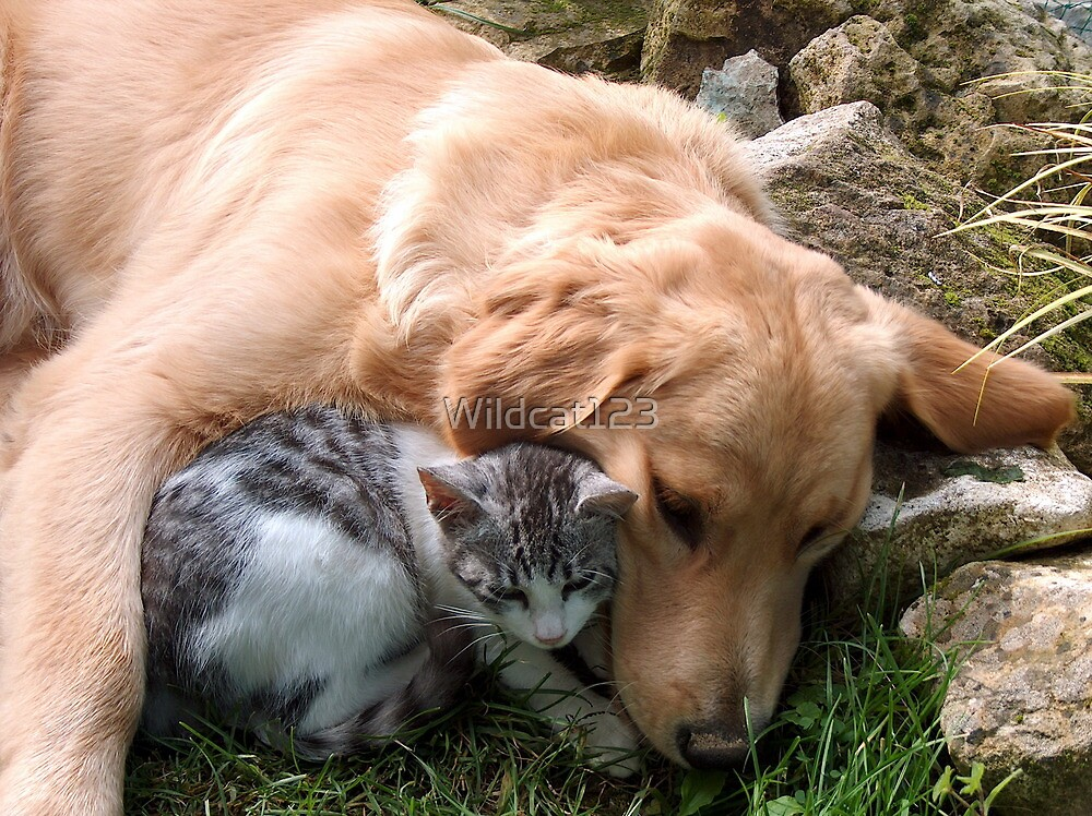 Best friend, cat and dog. by Wildcat123