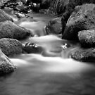 Cement Creek by Christine Wilson