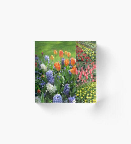Flamme der Farbe - Keukenhof Tulip Collage Acrylblock