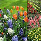 Flamme der Farbe - Keukenhof Tulip Collage von BlueMoonRose