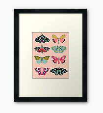 Lepidoptery No. 1 by Andrea Lauren  Framed Print
