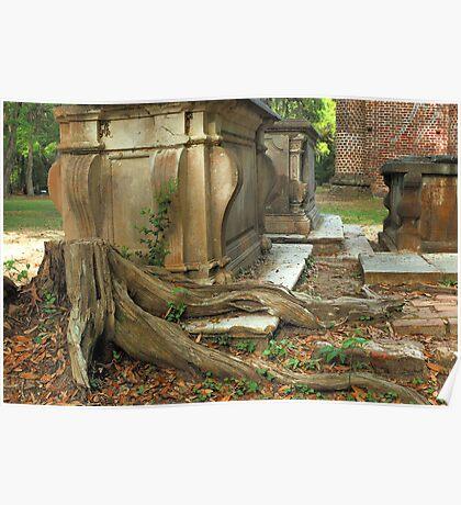 Confederate gravestone and live oak roots, Old Sheldon Church Ruins, Sheldon, South Carolina Poster