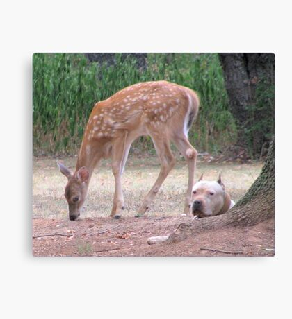 The Fawn And The Pit Bull Canvas Print